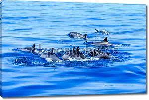 Счастливые дельфины в воде