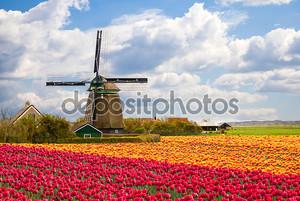 Мельница с Поле тюльпанов