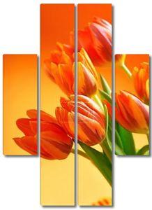 оранжевые тюльпаны