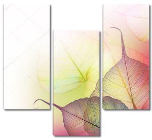 Листья полупрозрачные