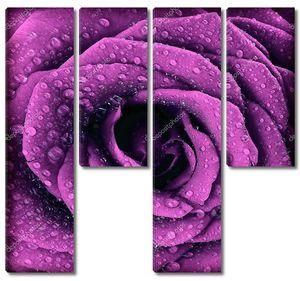 Темный розовый бутон розы