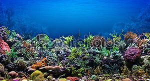 Коралловый риф в красивом море