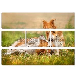 Две счастливые собака лежа на траве