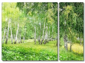 Зеленый лес с березами