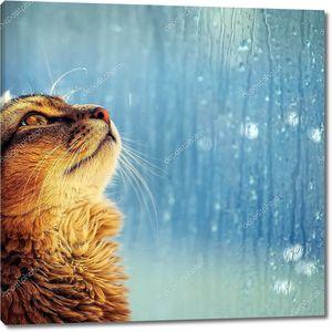 Кот глядит в окно в дождливый день