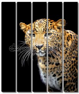 Леопард молодой