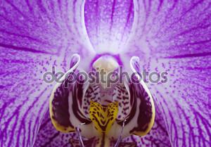 Макрос орхидеи