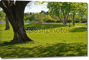 с видом на городской парк лето