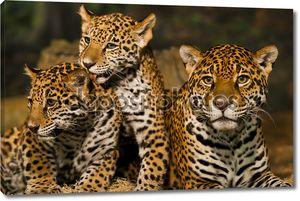 Семья Ягуар
