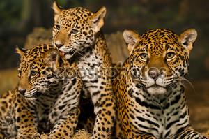 Два детеныша с матерью