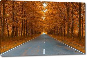 Дорога осенью Вудс