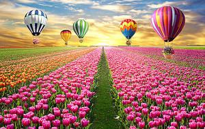 Шары над тюльпановым полем