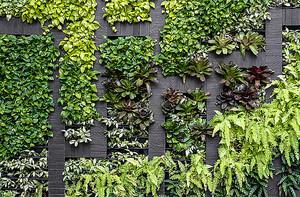 Стена из вьющихся растений