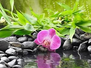 Камни с орхидеями