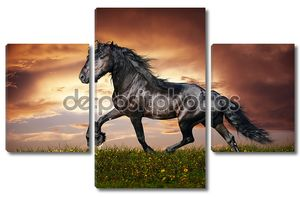 Черный фризская лошадь рысь