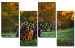 игрушечная собака терьера осенью по природе