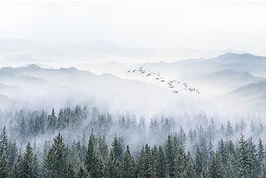 Туман опустился на бор