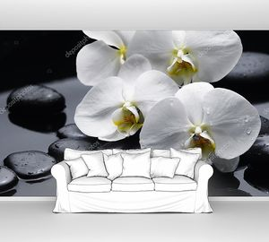 Орхидея на мокрых камнях