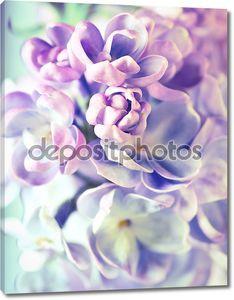 Красивые сиреневые цветы фон