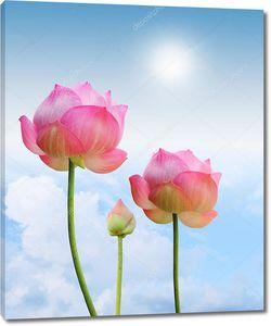 Цветок лотоса на стебле