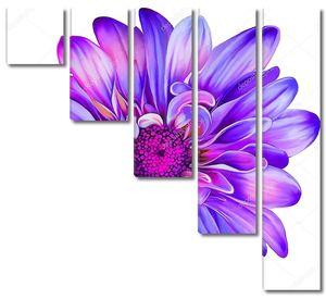 Фиолетовый цветок хризантемы