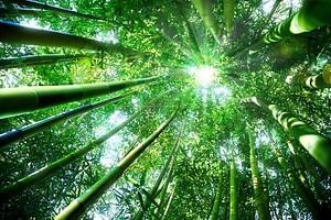 бамбуковый лес - понятие дзэн