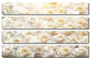 Стена из нежных роз