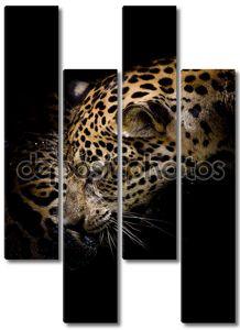 Портрет с ягуаром