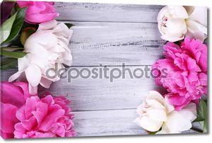 Пионы на цветной деревянный фон