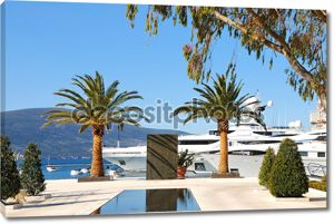 Яхты и пальмы в порту