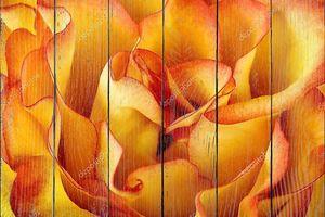 Оранжевые лепестки розы фон