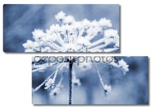 замороженный цветок