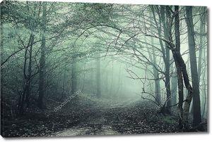 Зеленый туман в таинственный лес