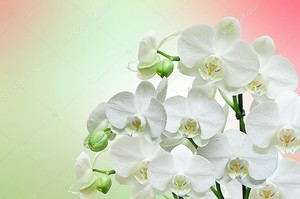Орхидеи на розово-зеленом фоне