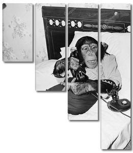 шимпанзе, сидящий в постели по телефону и курящий сигару