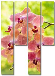 орхидею