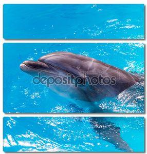Дельфины плавают в бассейн рядом.