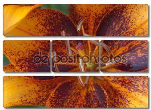 Оранжевый tigerlily макрос