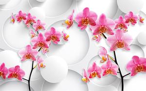 Розовые орхидеи с большими кругами