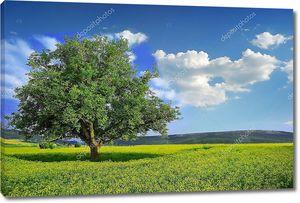 одинокое дерево в желтой области