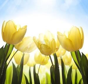 Искусство Полевые цветы, покрытые росой на солнце
