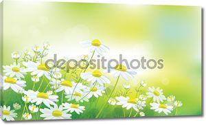 Вектор весны фон с Белые ромашки