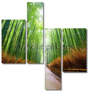 Путь к бамбуковый лес, Арасияма, Киото, Джапа