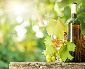 Бутылка вина на винограднике