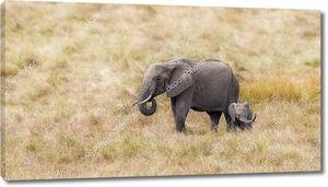 Малыш слон с мамой