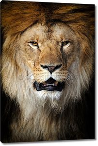 Лев портретное фото