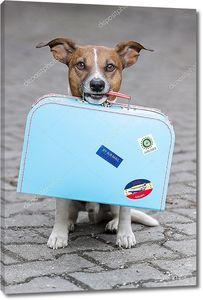Собака с чемоданом в зубах
