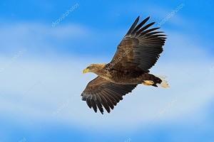 Летают хищные птицы