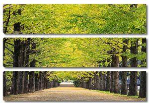 Ранняя осень в парке