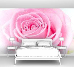 Розовый бутон крупно